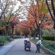 落葉の公園にて
