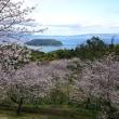 桜と知林ヶ島と砂州