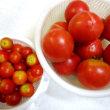 トマトぎらいが、わがトマトはうまいのだと知った夏