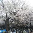 代々木公園の桜 薄暮 2018