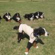 団体戦練習