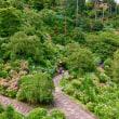 ここは極楽浄土か ?  善峯寺のアジサイ苑