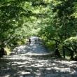 風薫る新緑の竹林寺