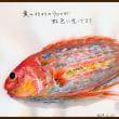 魚のイトヨリのウロコが虹色に光っています