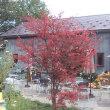 Ё:秋の色彩