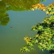 『秋の庭』 心字池