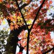 理窓会記念公園 もみじの紅葉が見頃