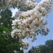 夏ならではの花たち