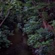 霧雨の中玉川上水を歩いてみました