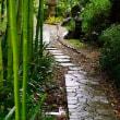 雨の竹林(赤塚植物園)