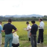 水稲の新品種「だて正夢」の現地検討会を開催しました