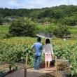 上野公園ひまわり園
