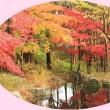 北播磨余暇村公園の紅葉