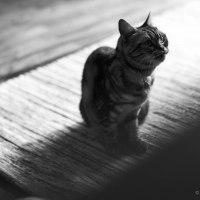 猫、マットを占拠する