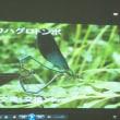 6/10アキノ隊員に聞く やんばる高江の生きものたち