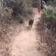 登りがある方が運動になる
