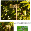 秋晴れとテネラルトンボ?(H29.9.13)