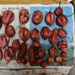 サツマイモ2018:安納芋