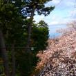 『桜便り』 松並木