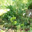 ノラちゃんが庭に住んでる?