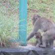 またまたお猿さんたち(@_@;