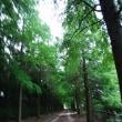 楽しい園芸 涼しい散歩道