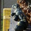 雑草取り  野菜の収穫  カボチャ