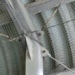 鹿児島県志布志市で防鳥ネットを設置!!