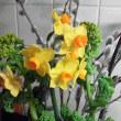 猫柳と黄水仙と菜の花