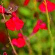 名前を知らない赤い花
