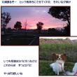 OPDES筑後広域公園 2017.11.03・04