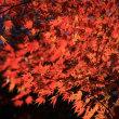 森林公園の紅葉2017(その2)