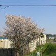 今日のiwamizawa city