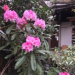 Mamieのフランス留学日記 京都旅行