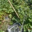 スミチオンを散布しました サツマイモ ネギ ナス シロウリ キュウリ