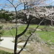山のゴルフ場にもやっと春が・・・