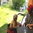 愛犬と一緒に行ける❝あざみ野ガーデンズ❞