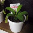 きてるのか食虫植物