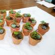 花育 多肉植物の寄せ植え教室 ◇ 新潟市立曽野木小学校 ◇