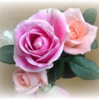 薔薇と   いちょう