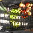 今日の収穫 トマト キュウリ ナス トウガラシ類 オクラ 青シソ バジル うまい菜
