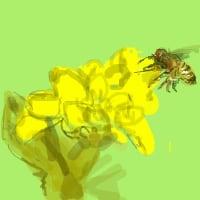 日本ミツバチが全然いない!