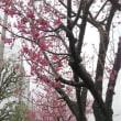 猫も大好きな、春らしい色、春らしい香り。