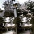 廣田神社の桜