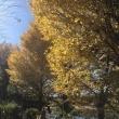 ポタリング日記-46日目-多摩川(羽村堰)