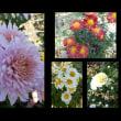 11月6日・今日の花