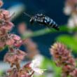 幸せの青いハチ?