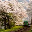 春の樽見鉄道 谷汲口駅