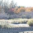 埼玉県川越市の郊外にある伊佐沼の浅瀬などで、イカルチドリなども観察しました