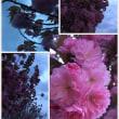 この花の名前知りたい✋